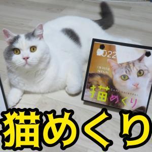 祝!猫めくりカレンダー採用
