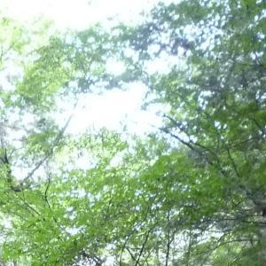 6/24(木)13時半~オンライン・レイキ交流会☆