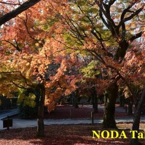 晩秋の京都旅行