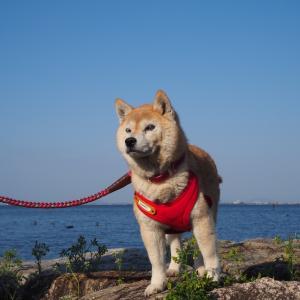 コロちゃん湖岸を行く
