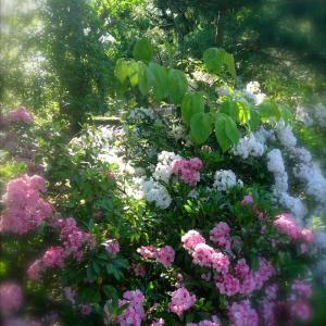 季節の花とリンゴのタルト