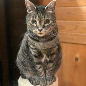 猫のレオに新しい爪研ぎ