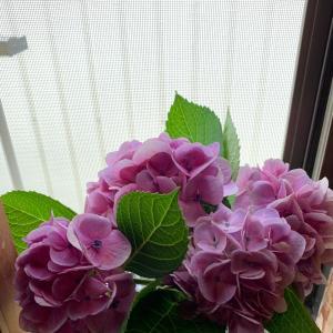 紫陽花も…