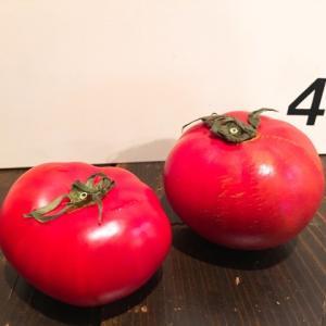 味覚検定 トマト編