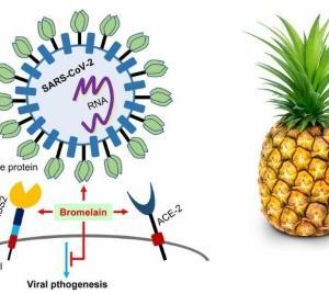 パイナップル酵素が副反応にも効く?