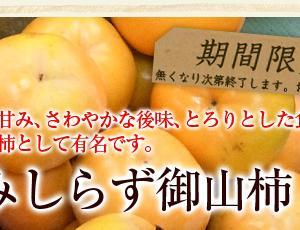 会津みしらず御山柿 販売開始(2019)