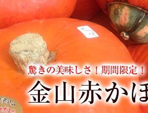 おまたせしました! 金山赤かぼちゃ2019