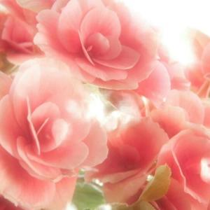 ★【母の日】お花選びに迷った時の参考になりますように
