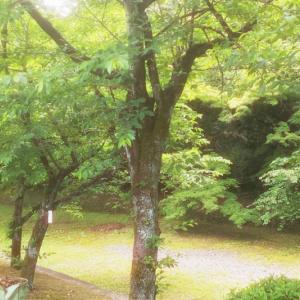 あつまれ 青空テコンドー熱田の森