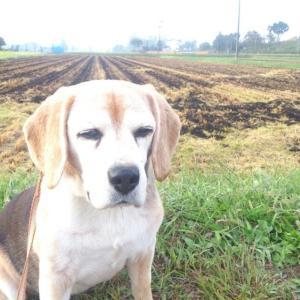 稲刈り終了。