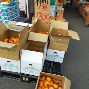 秋野菜が安い