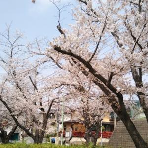 桜の季節の嬉しいお顔。