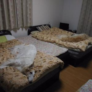 ユリ母ベッド大人気