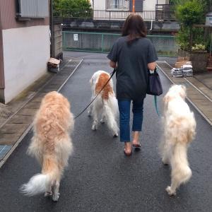 3頭並んで歩きます