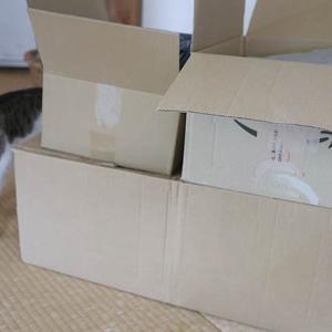 【セカンドストリート】で不用品買取りを依頼したら猫の抜毛で激安査定(ショック)