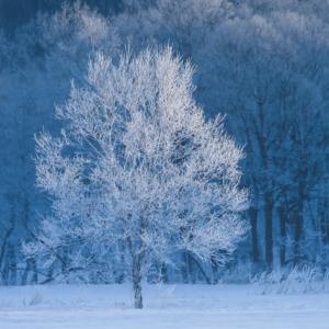 冬の葬儀ナレーション一文例