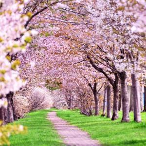 葬儀ナレーション例文「春」「3月」「4月」