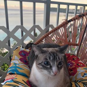 グアムの天気 ネコのいる暮らし
