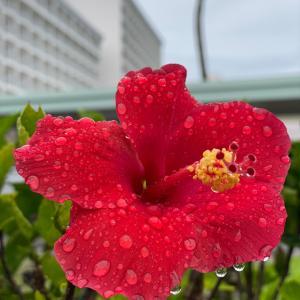グアムの天気 雨上がり
