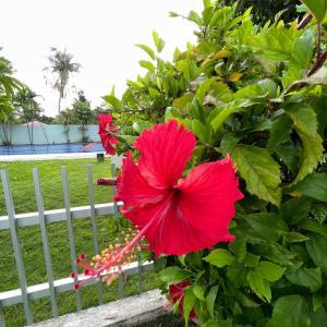 グアムの天気 南国の花 インスタ 生配信