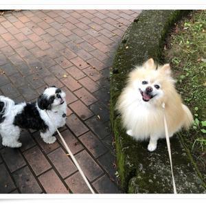 犬たちと楽しく、ありがたく!