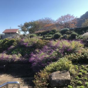 カスイチ前にお散歩【城山湖は意外と遠い】