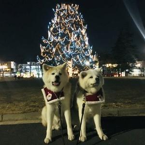 あたちたちのクリスマス(12)