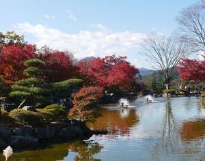 桜山公園 冬桜と紅葉 群馬県藤岡市 紅葉2019