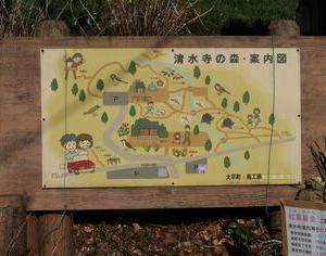 【栃木市 清水寺】ロウバイ【見頃を迎えています】