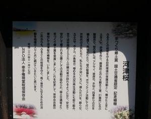 【河津桜、菜の花】早くもピンク色と黄色のコラボ【権現堂桜堤】