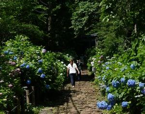 太平山 あじさい坂 約1,000段の階段 太平山神社 2020年6月17日