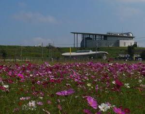 加須未来館のコスモス【加須市】 2021年10月11日