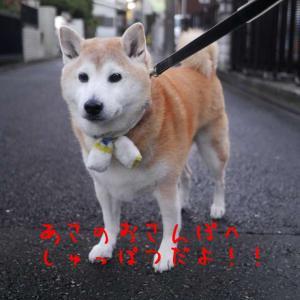 風太の日記 11月12日 / 秋晴れの日に動物病院へ!