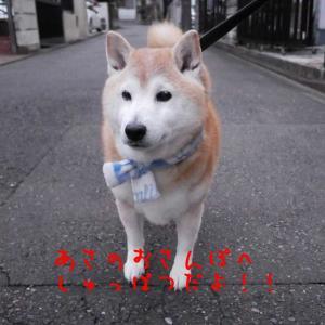風太の日記 1月22日 / 真冬の日に動物病院へ!