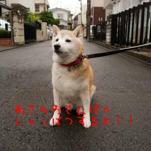 風太の日記 7月13日 / 梅雨は続いてトリミング!