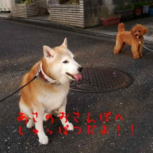 風太の日記 9月8日 / 晴れの天気でトリミング!
