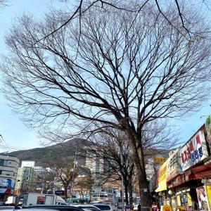 韓国34回目の旅 ~未踏の地へ~5日目①釜山 草梁