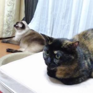 猫の特集番組