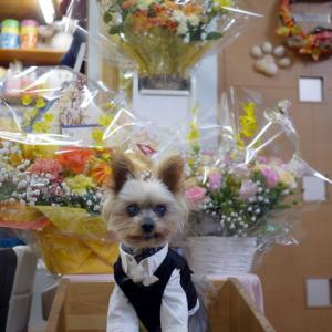 Dog Cafe プラスわん ここあ店長の営業報告 プラスわん創業祭を迎えた日