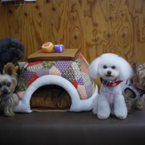 Dog Cafe プラスわん ここあ店長の営業報告 臨時休業のお知らせです