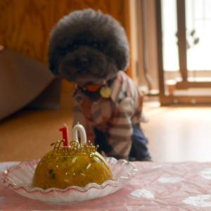 Dog Cafe プラスわん ここあ店長の営業報告 プラスわん 末っ子 ぷりんちゃん10歳誕生日