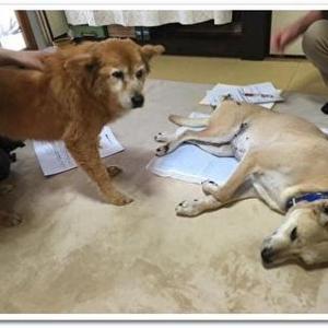 犬の整体・マッサージ教室