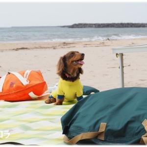 日立の海遊びの続きです