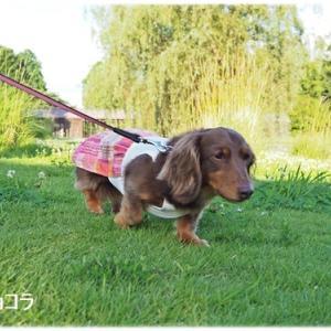 梅雨の晴れ間にお散歩