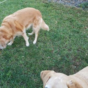 犬もびっくりな庭師
