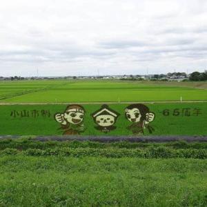 ロードレーサー_PROJECT松永で「おやま田んぼアート2019スタンプラリー」参加してきた。