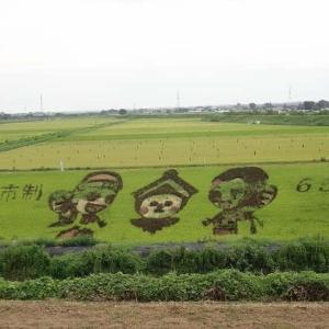 ロードレーサー_PROJECT松永で、おやま田んぼアートを観察してきた。