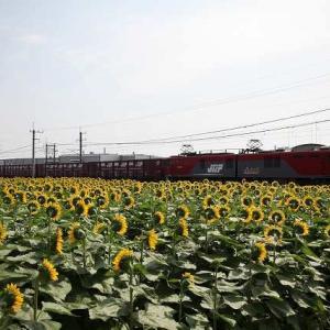 2016年7月撮影「貨物列車」