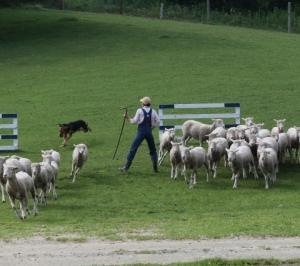 【宿題】寓話の改作2 羊飼いの少年と狼