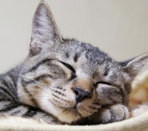 睡眠時間と脳卒中の発症リスク